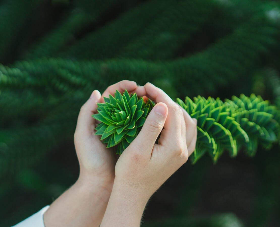 Eine menschliche Hand hält eine Pflanze liebevoll